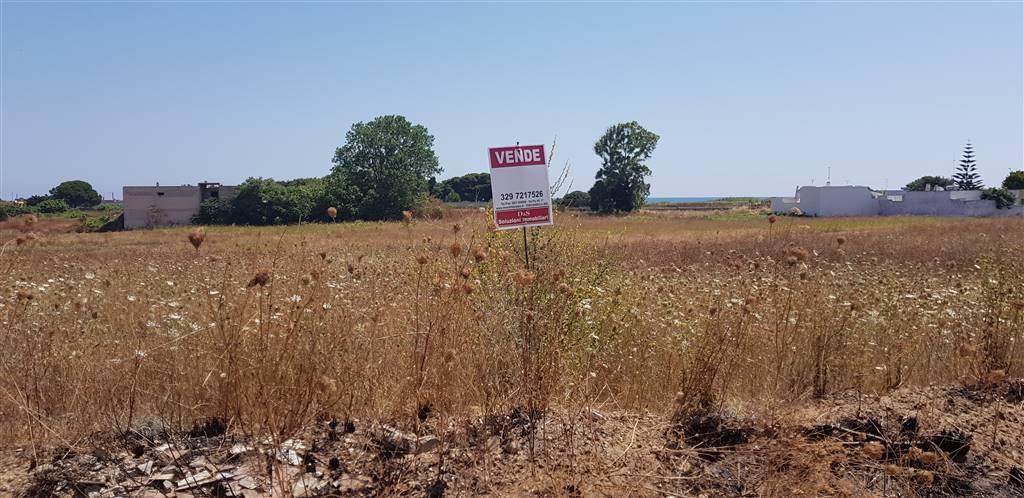 Terreno agricoloaTORCHIAROLO